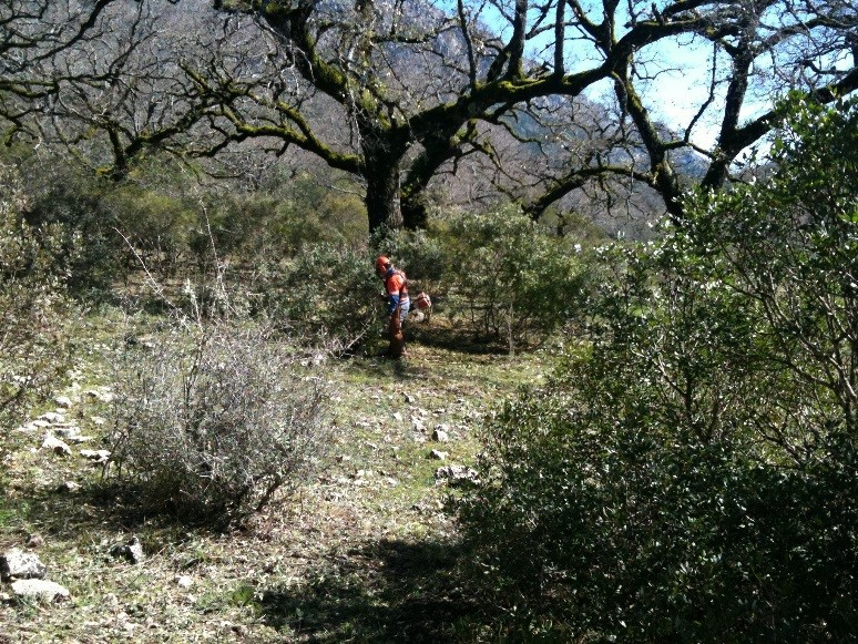 Preventive forestry treatments for the improvement and conservation of habitats of interest in various regions of Castilla y León